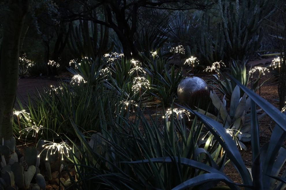 Image for Desert Botanical Garden, AZ, USA. 2015